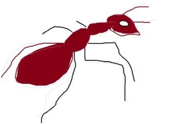 Ant Control Warwickshire
