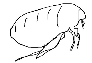 Flea Control Warwickshire