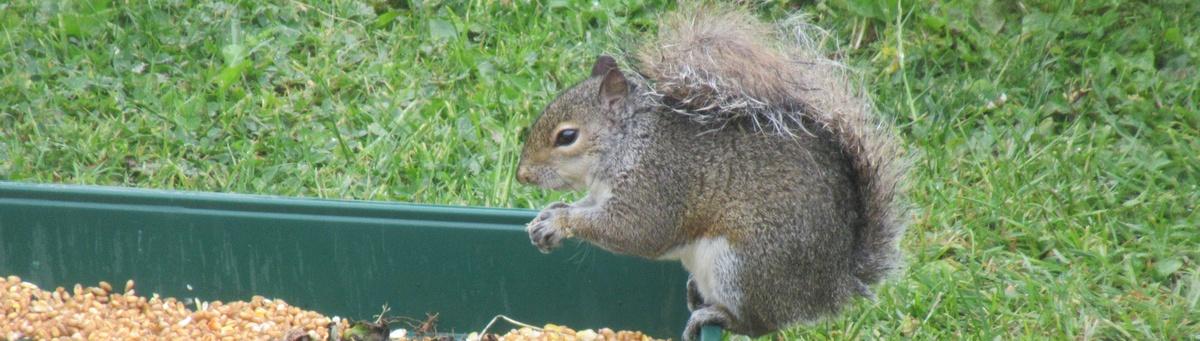squirrel control shipston